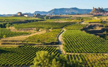 Vitoria and La Rioja Wine Area Full Day Tour from Bilbao