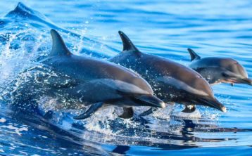 Gibraltar Sightseeing Tour with Dolphin from Málaga