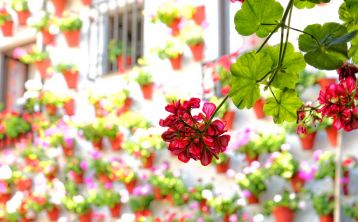 Córdoba´s Courtyards guided tour
